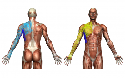 What is Myofascial Correction™